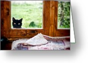 Peeping Greeting Cards - Wondering whats SHE... Better investigate Greeting Card by Silvia Ganora