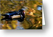 Clayton Photo Greeting Cards - Wood Duck Greeting Card by Clayton Bruster