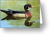 Smudgeart Greeting Cards - Wood Duck Greeting Card by Madeline M Allen