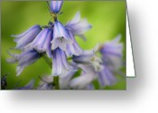 Endymion Greeting Cards - Wood Hyacinths Squared Greeting Card by Teresa Mucha