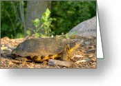 Wood Turtle Greeting Cards - Wood Turtle 1 Greeting Card by Thomas Young