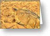 Wood Turtle Greeting Cards - Wood Turtle 3 Greeting Card by Thomas Young