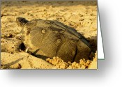 Wood Turtle Greeting Cards - Wood Turtle 4 Greeting Card by Thomas Young