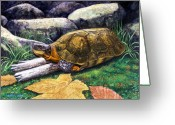 Wood Turtle Greeting Cards - Wood Turtle Greeting Card by Frank Wilson