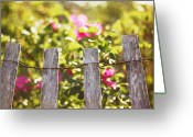 Fence Greeting Cards - Wooden Fence Against Rosa Rugosa Greeting Card by Lucy Loomis, Photographer