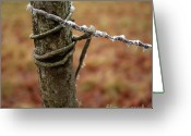 Snow Covered Greeting Cards - Wooden posts Greeting Card by Bernard Jaubert