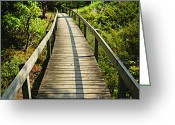 Rural Greeting Cards - Wooden walkway through forest Greeting Card by Elena Elisseeva