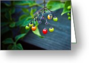 Kitchen Photos Greeting Cards - Woodland Berries Greeting Card by Sara Frank
