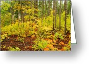 Forest Floor Greeting Cards - Woodland Panorama Greeting Card by Michael Peychich