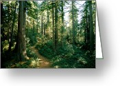 Refuges Greeting Cards - Woodland Path Winding Through A Grove Greeting Card by James P. Blair
