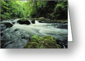 Time Exposures Greeting Cards - Woodland Stream And Rapids, Time Greeting Card by Norbert Rosing
