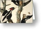 Lichen Greeting Cards - Woodpecker Greeting Card by John James Audubon
