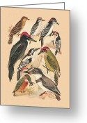 Belted Mixed Media Greeting Cards - Woodpeckers and Others Greeting Card by Eric Kempson