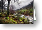 Misty Greeting Cards - Woods Landscape Greeting Card by Carlos Caetano