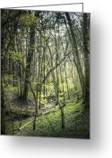 Trees Photograph Greeting Cards - Woods Greeting Card by Scott Norris