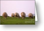 Sheep Greeting Cards - Wooly Bottoms Greeting Card by Angel  Tarantella