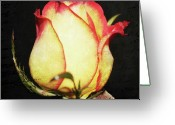 Cream Roses Greeting Cards - Words of the Rose Greeting Card by Cathie Tyler