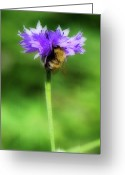 Honey Bee Greeting Cards - Work Mundane - Change Your Perspective Greeting Card by Lisa Knechtel