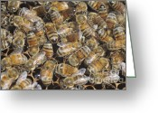 Honeycomb Greeting Cards - Worker bees on a honeycomb  Greeting Card by Shay Levy 
