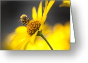 Horizontally Greeting Cards - Working bee Greeting Card by Pavlo Kolotenko