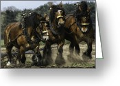 Plowing Greeting Cards - Working Together Greeting Card by Gigi Embrechts