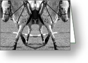 Dressage Digital Art Greeting Cards - Working Towards Excellence Greeting Card by East Coast Barrier Islands Betsy A Cutler