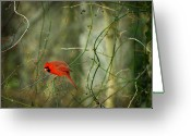 Cardinal Greeting Cards - World of Fire and Dew Greeting Card by Rebecca Sherman