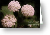 Swamp Milkweed Greeting Cards - Worlds apart... Greeting Card by Caroline Ferrante