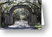 Live Oak Trees Greeting Cards - Wormsloe Plantation Gate Greeting Card by Carol Groenen