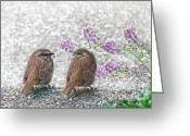 Wren Greeting Cards - Wren Bird Sweethearts Greeting Card by Jennie Marie Schell