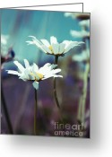"\""blue Flowers\\\"" Greeting Cards - Xposed - s02 Greeting Card by Variance Collections"