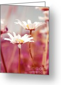 Fleur Greeting Cards - Xposed - s03 Greeting Card by Variance Collections