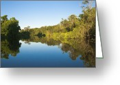 Amazon Greeting Cards - Yacuma River Greeting Card by Marc Shandro