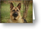 Alsatian Greeting Cards - Yahtzee - German Shepherd Greeting Card by Sandy Keeton