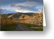 Orchards Greeting Cards - Yakima Valley Spring Greeting Card by Mike  Dawson