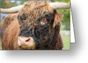 Yak Greeting Cards - Yakity Yak Greeting Card by Karol  Livote