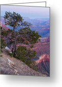 Ponderosa Greeting Cards - Yavapai Pine Greeting Card by Adam Pender