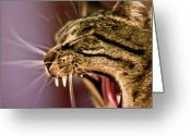 Laziness Greeting Cards - Yawing Cat Greeting Card by Olga Tremblay