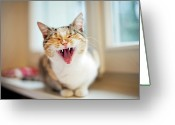 Laziness Greeting Cards - Yawning Cat Greeting Card by Les Hirondelles Photography