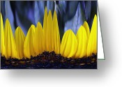 Wildflower Fine Art Greeting Cards - Yellow 6 Greeting Card by Skip Nall