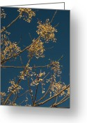 Turning Leaves Greeting Cards - Yellow and Blue Greeting Card by Karen Musick