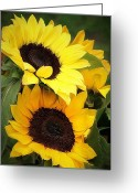 Northwest Flowers Greeting Cards - Yellow and Green Greeting Card by Cathie Tyler