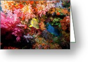 Coral Reef Greeting Cards - Yellow Banded Sweetlip Fish And Coral Greeting Card by Beverly Factor