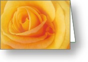 Cultivars Greeting Cards - Yellow Blend Greeting Card by Michael Peychich