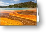 Prismatic Greeting Cards - Yellow Brick Road - Grand Prismatic Spring Greeting Card by Adam Pender