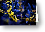 Bruster Greeting Cards - Yellow Bursts in Blue Field Greeting Card by Clayton Bruster