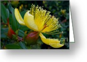 Stamen Greeting Cards - Yellow Bush Flower Greeting Card by Kaye Menner