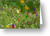 John Kolenberg Greeting Cards - Yellow Butterfly In Meadow Greeting Card by John  Kolenberg