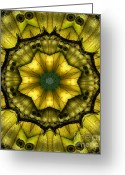 Janeen Wassink Searles Greeting Cards - Yellow Butterfly Wing Kaleidoscope Mandala Greeting Card by Janeen Wassink Searles