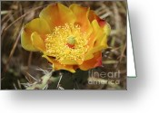 Desert Greeting Cards - Yellow Cactus Flower On Display Greeting Card by Ben and Raisa Gertsberg